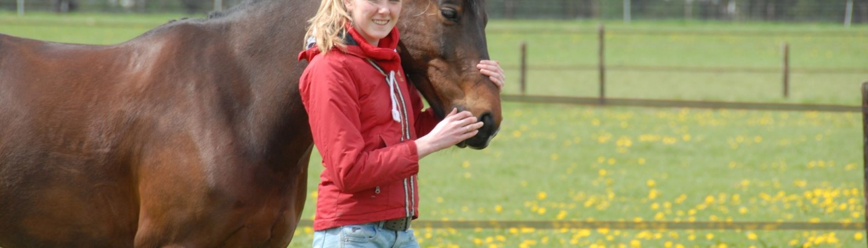 buitenvakantie paarden Veluwe Nederland