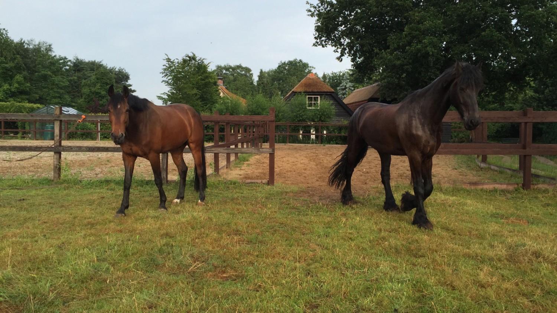 paardenwei vakantie met paarden Veluwe Nederland