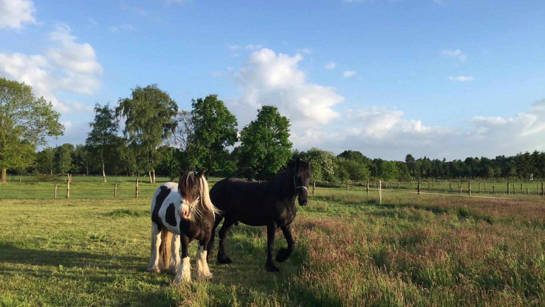 paardenvakantie Vierhouten Veluwe