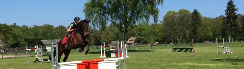 springen Vierhouten paardenvakantie