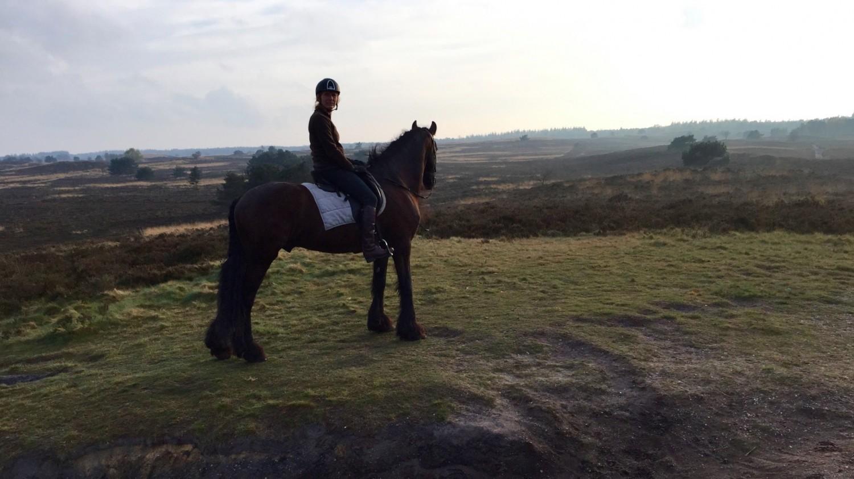 buitenzijden paard en pony vanuit vakantiewoning