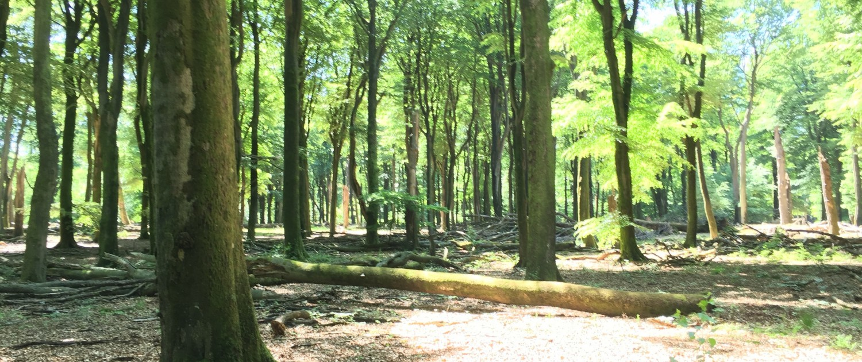 Rondje waskolk vierhouten veluwetrail idyllisch for Vakantiehuisje bos