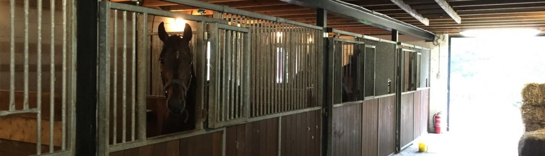 paardenstal paarden vakantie Veluwe