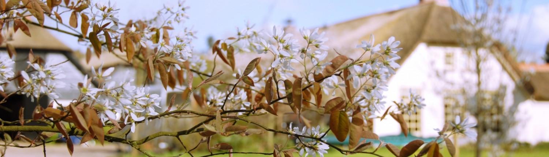 lente buiten op de Veluwe: krent in bloei