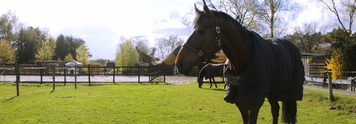 De paarden hebben er zin in