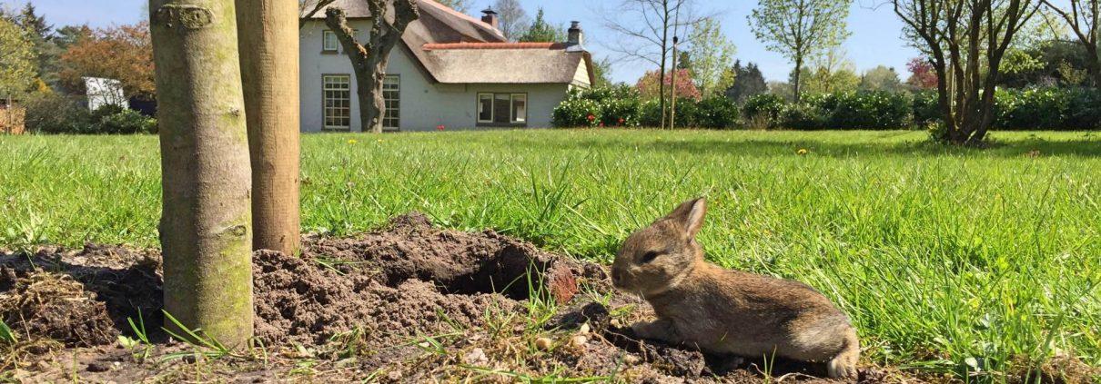konijnen buitenleven Veluwe