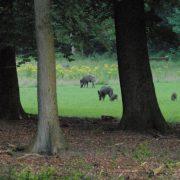vakantiehuisje in bos met wild en boswachter